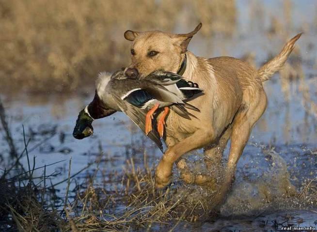 весенний сезон охоты 2014